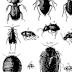 Sassari, Collezione entomologica, immagine da sito ufficiale della struttura